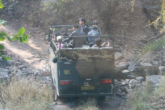 Ranthambore National Park: 16 seater canters plough through the terrain of the Ranthambhore Park