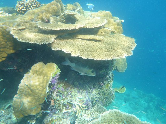 Vilamendhoo Island Resort & Spa: Clear blue sea