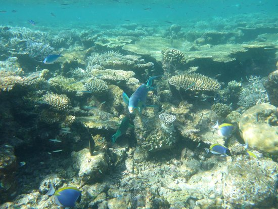 Vilamendhoo Island Resort & Spa: Coral
