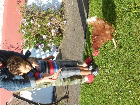 Alpine Guesthouse : Resident chickens