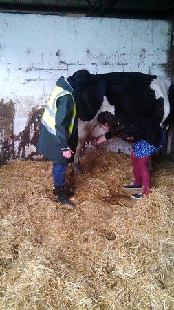 Causey Farm: Milk the cow