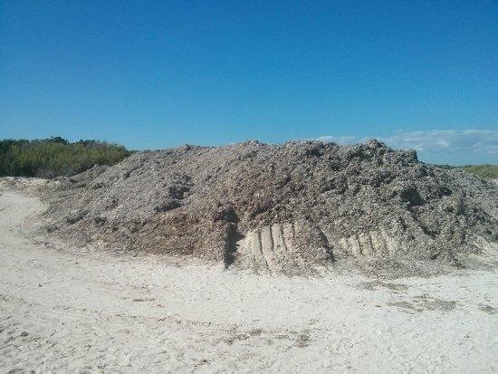 Playa de Es Trenc: Diversi ammassi di alghe lungo la spiaggia