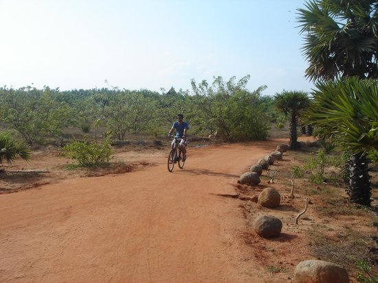 The Dune Eco Village & Spa: Mode of Transport