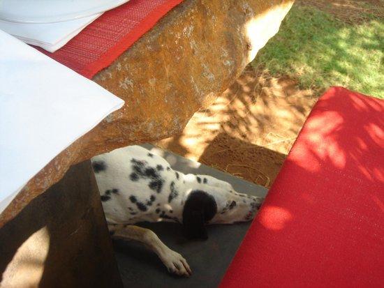 The Dune Eco Village & Spa: Friendly Dog