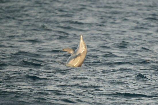 Constance Halaveli: dolphin adventure