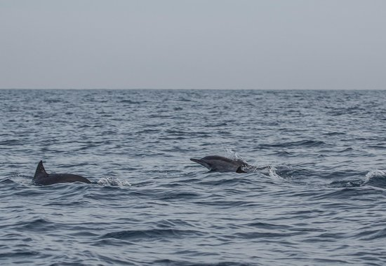 The Lovina: Dolphin safari tour