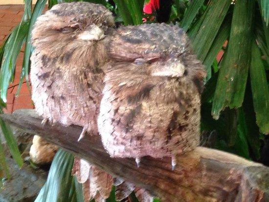 Wildlife Habitat Port Douglas: Breakfast buddies