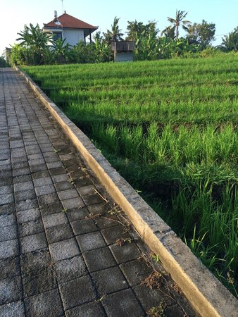 The Apartments Canggu: surrounding rice paddies - uphill walk from studios to office and road
