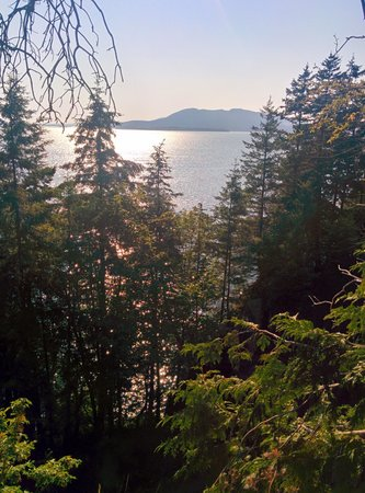 Larrabee State Park: Beautiful Trail