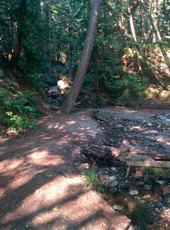 Larrabee State Park: Creeks and train tracks along the trail!