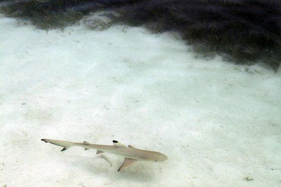 Fun Island Resort: Маленькая прибрежная акула