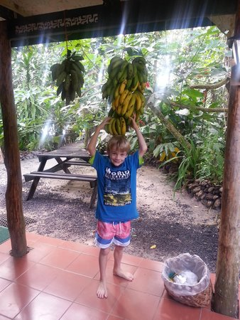 Lusia's Lagoon Chalets : Beautiful bananas any time you want ...