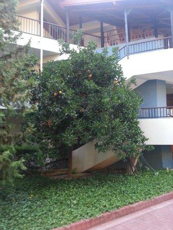 Barut Acanthus & Cennet: территория отеля