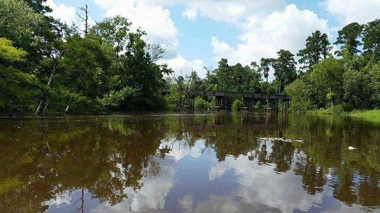 Village Creek State Park: Village Creek