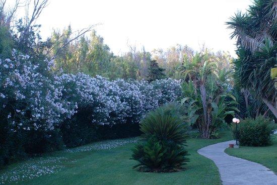 Club Med Kamarina : Hotel garden