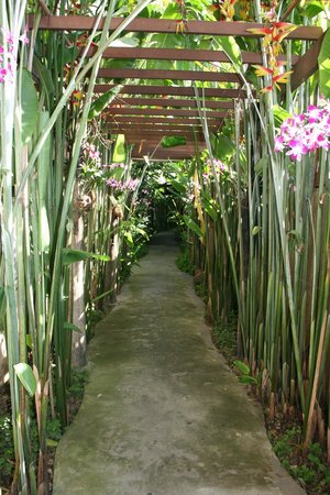 Shewe Wana Boutique Resort and Spa : Walkway