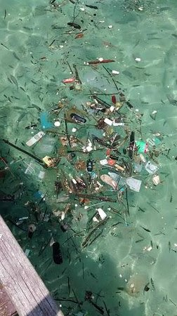 Pulau Payar Marine Park: Water is filled with natural debris and rubbish dumped by inconsiderate visitors.