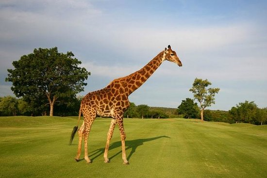 Amafu Forest Lodge: Golf in the wild- a choice of 3 fantastic golf courses in the nearby vicinity...