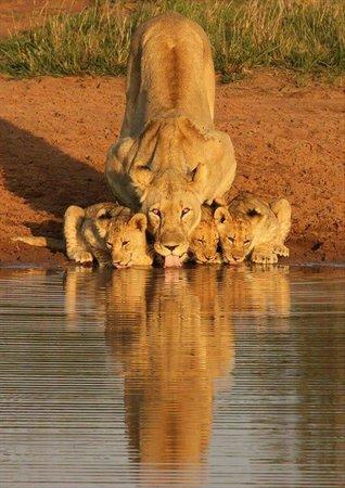 Amafu Forest Lodge: 40 mins from Kruger National Park...