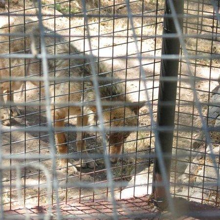Parc Zoologique de Frejus : A t-il l'air heureux ?