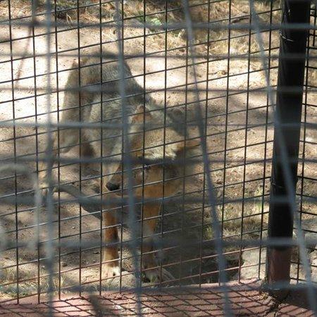 Parc Zoologique de Frejus : Il a visiblement des pbs aux yeux