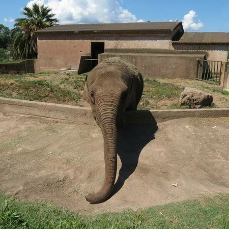 Parc Zoologique de Frejus : Ennui