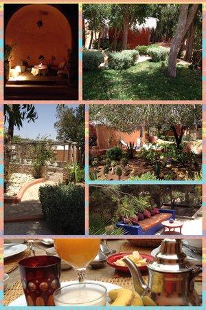 Riad Baoussala: Le jardins, le patio et le petit déjeuner