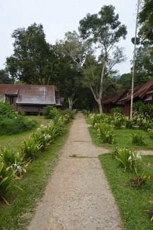 Mutiara Taman Negara : Walkway to the cabin