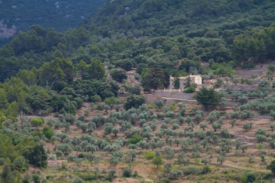Valldemossa Hotel: view from terrace - dinner
