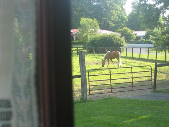 WhistleWood Farm Bed and Breakfast: Morning view from room