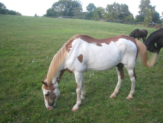 WhistleWood Farm Bed and Breakfast: Beautiful horses
