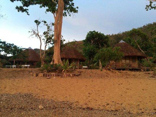 Cashew Grove Beach Resort : Bungalows fronting the beach