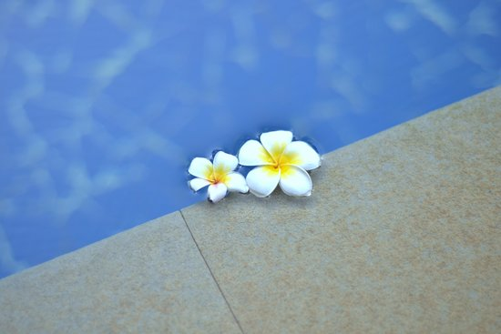 Lemon Tree Amarante Beach Resort, Goa: Pool