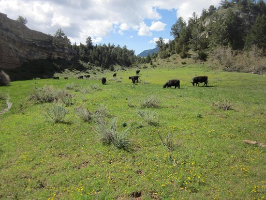 Dryhead Ranch: Big Sky country.