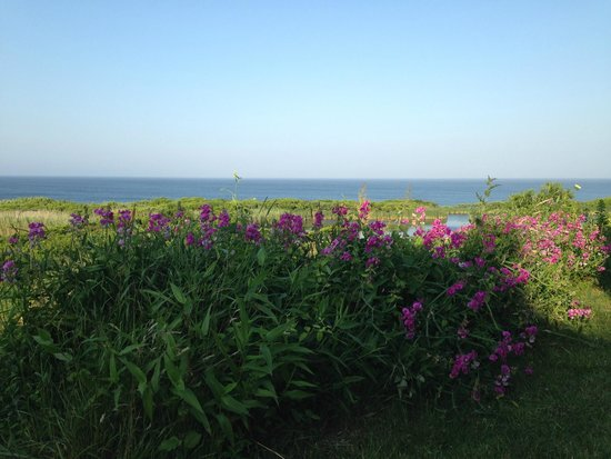 Sea Breeze: view from the porch at breakfast