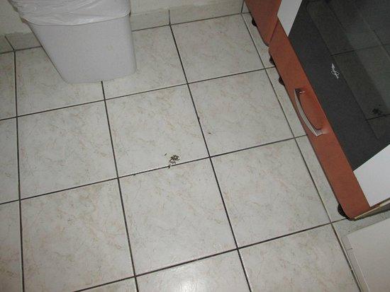 Magny Le Hongre Marne la Vallee: insectes
