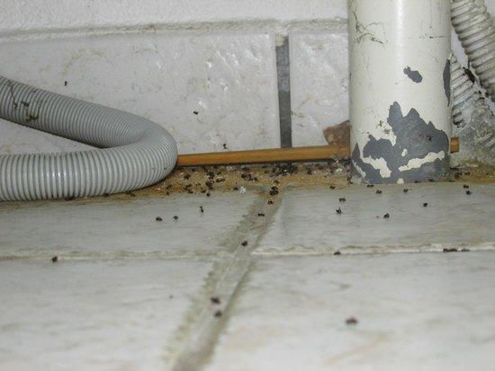 Magny Le Hongre Marne la Vallee: Fourmi trouvé sous l'évier de cuisine.