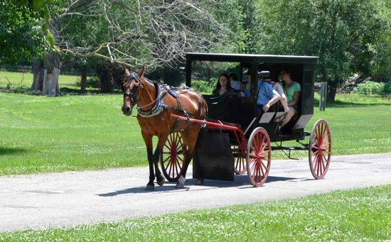 Rockome Gardens: You can take an Amish Buggy ride for $5.00 a piece