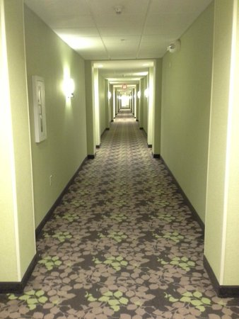 Homewood Suites by Hilton Charlotte Airport : The Hallway... O.O