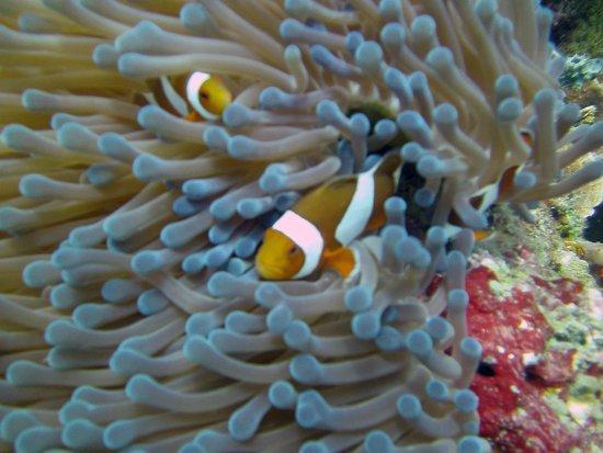 Blue Season Bali at The Menjangan: Photos from some of my Blue Seasons Dives at Menjangan