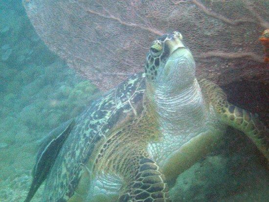 Blue Season Bali at The Menjangan: Turtle from one of my Blue Seasons dives