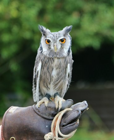 Falconry Experience Wales: Beautiful Mog