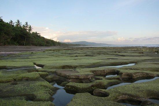 Kelapa Retreat Bali: Strand