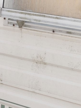 Seaview Holiday Village: Dirty mouldy windows
