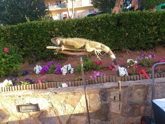 Palma Bay Club Resort : reptiles para el show de animacion