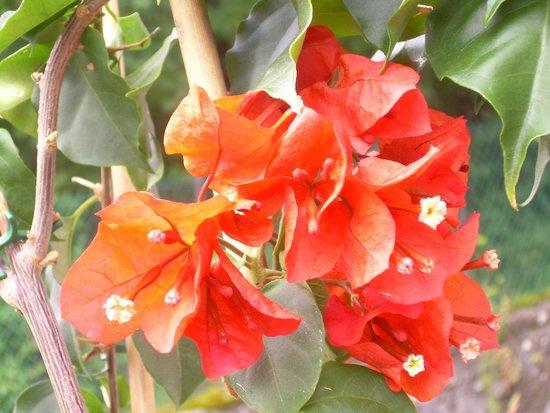 Casa Balducci Bed & Breakfast: Flowers in the Summer