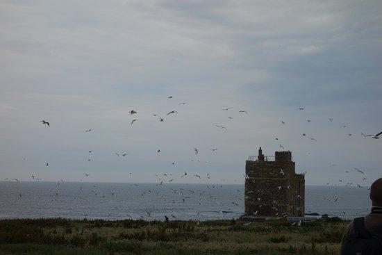 Farne Islands: Lots of birds!