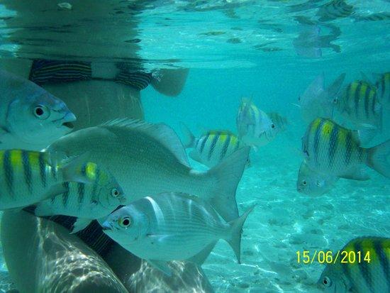 Melia Buenavista: Feeding the fishies
