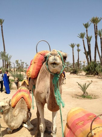 Click Excursions Day Tours: camel ride in palmeraie