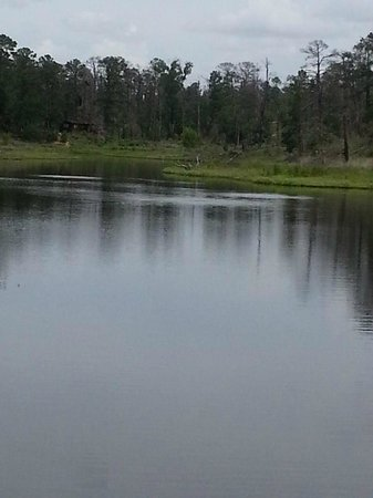 Bastrop State Park: view of cabins from bastrop lake